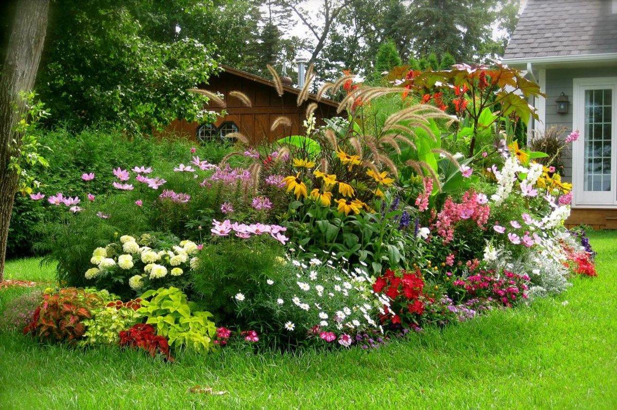 Цветы и кусты на дачном участке
