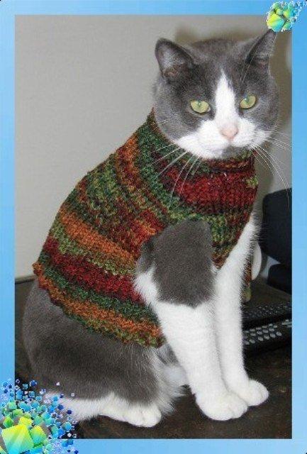 Свитер для кота вязание 788