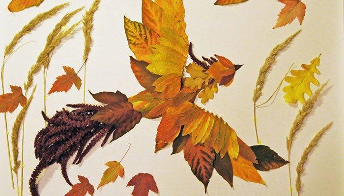 Кларкия изящная выращивание из семян в домашних условиях 53