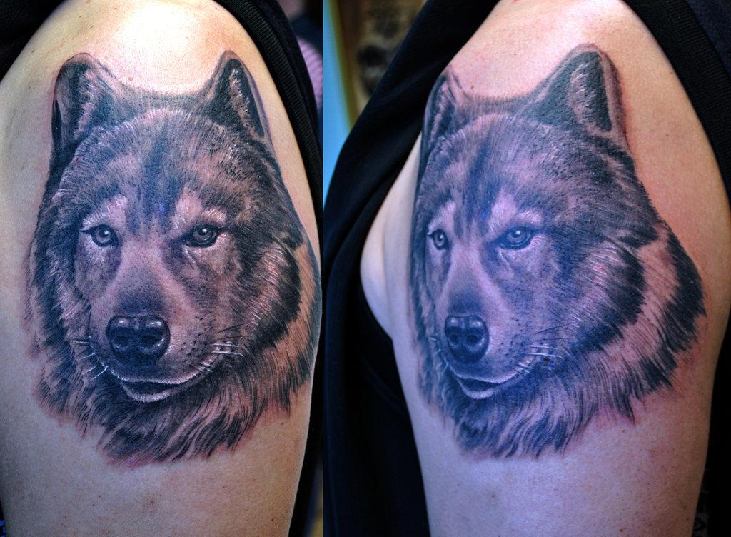 Фото для тату волк