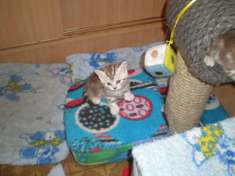 Игрушки для котят своими руками в домашних условиях легко и быстро 36