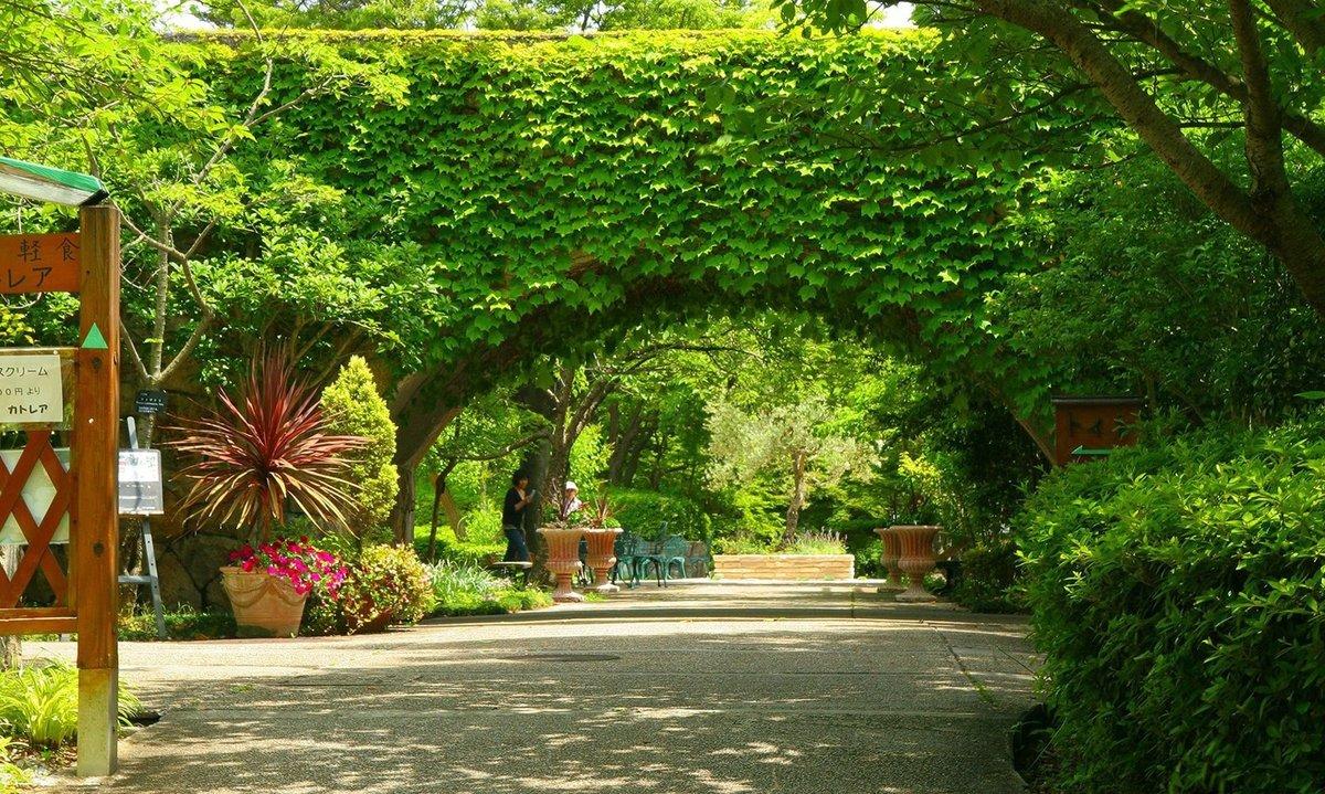 Виноградник в саду дизайн