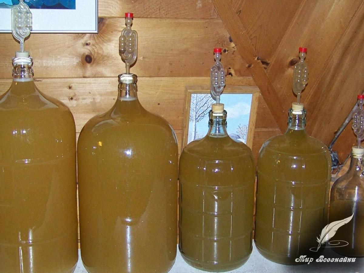 Рецепт приготовления яблочного вина в домашних условиях фото