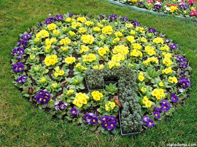 Почвопокрывающие цветы многолетники