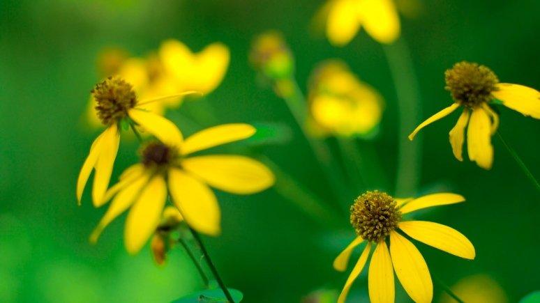 Желтый цветок  № 671039 без смс