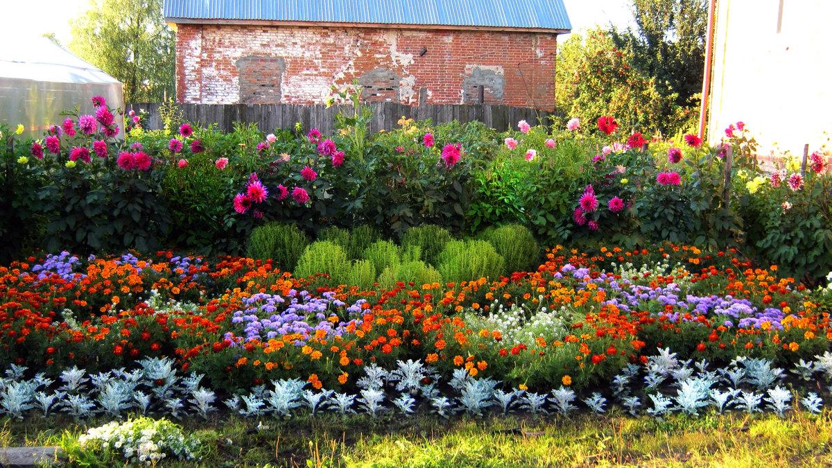 Цветы на даче для начинающих фото