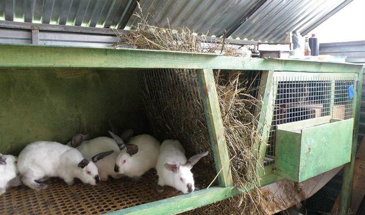 Что делать с кроликами в домашних условиях 972