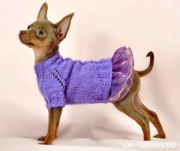 Одежда для собак той терьера своими рукам