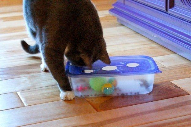 Игрушка коробка для кота своими руками 14