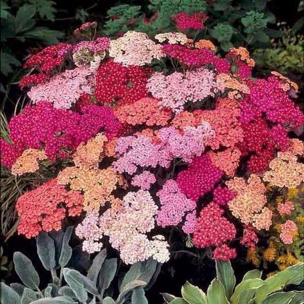Неприхотливые цветы для сада многолетники с