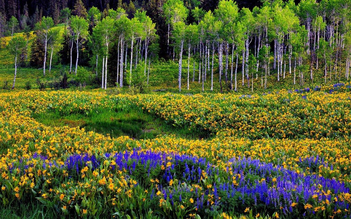 ТОП-7 самых красивых цветущих долин мира фото цветочных 76