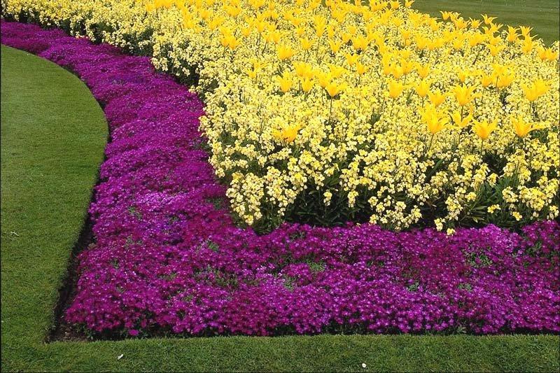 Фото низкорослых цветов и кустарников