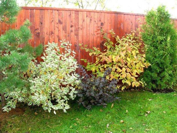 Какие кусты можно сажать осенью 41