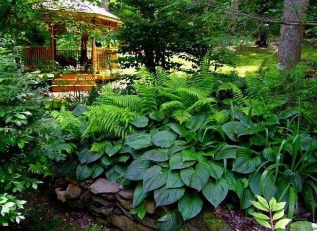Что сажать в тени сада 38