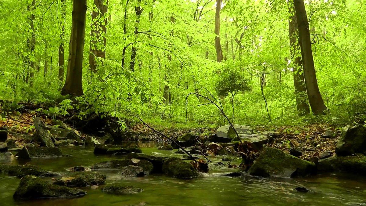 Звуки леса днем