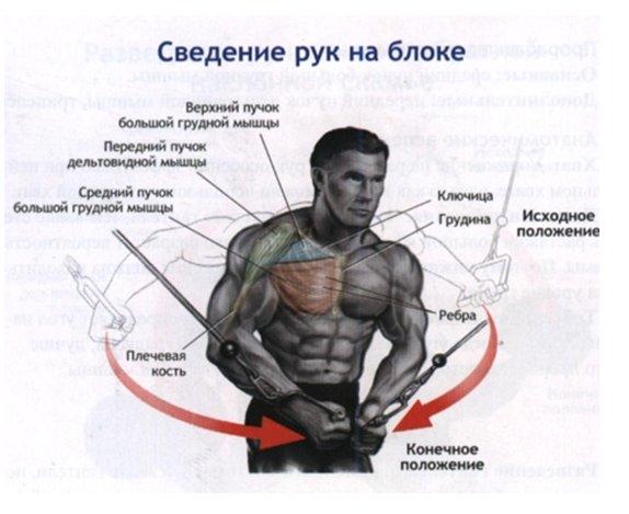 Схема тренировки мищц