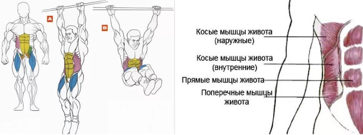 Как накачать все мышцы живота в домашних условиях 356