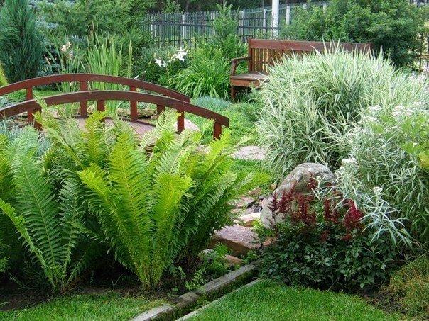 Садовые папоротники в ландшафтном дизайне