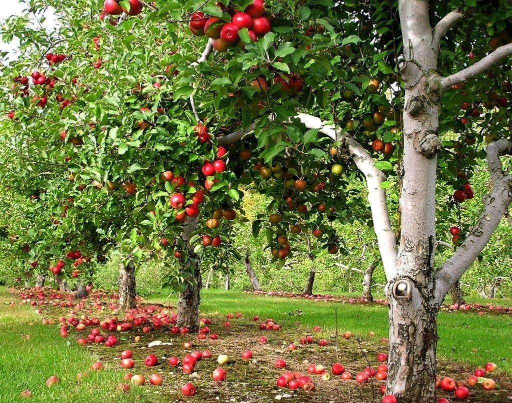 Какие деревья не сажать в саду