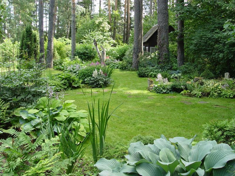 Лесной дизайн в саду