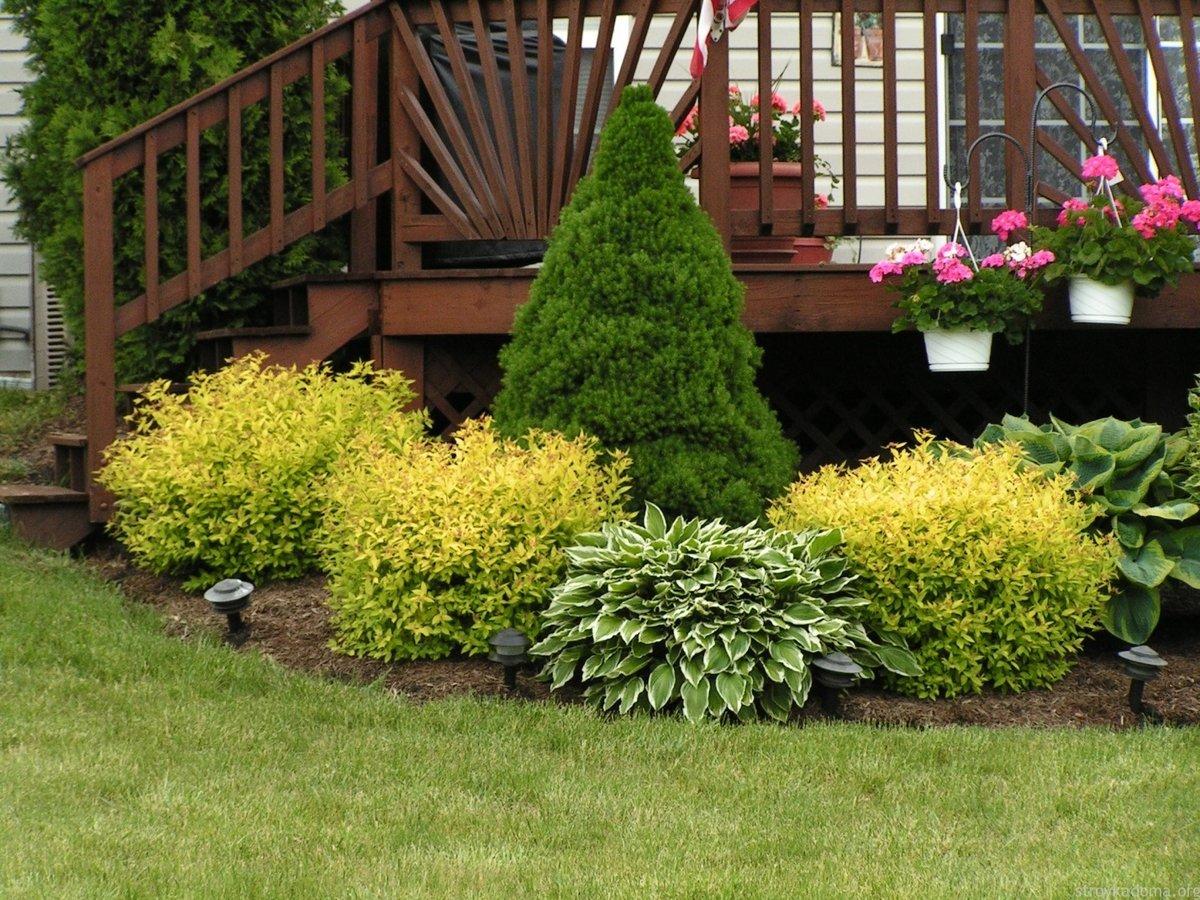 Вейгела в дизайне сада с какими цветами сочетается фото
