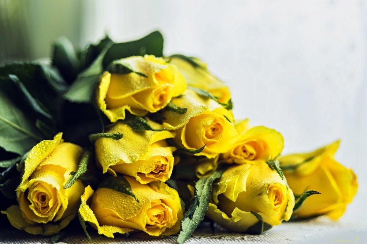 Желтые розы с поздравлениями 795