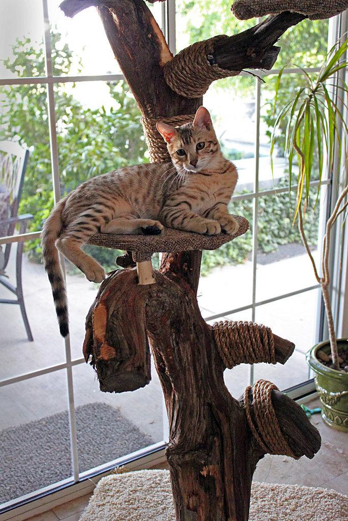 Деревья для кошек своими руками 592