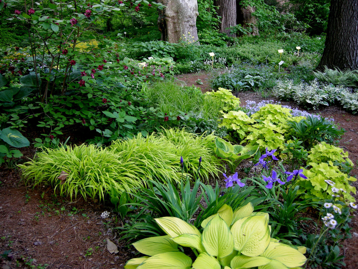 Цветы тенистого сада фото