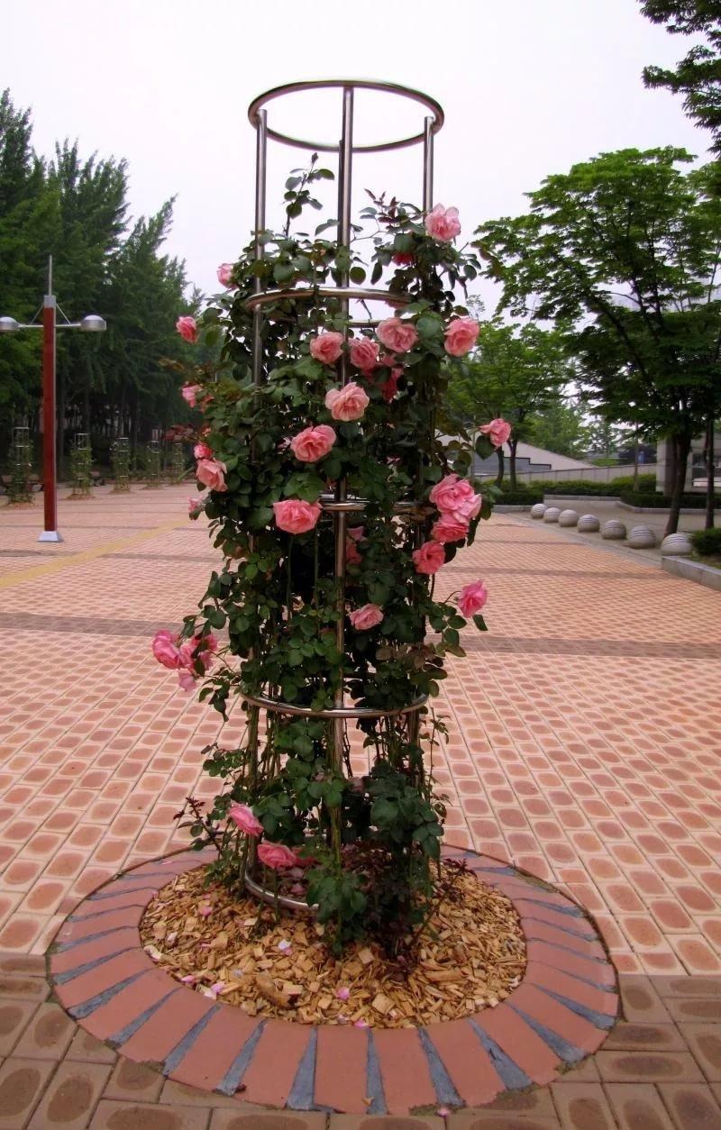 Подставка для кустовой розы