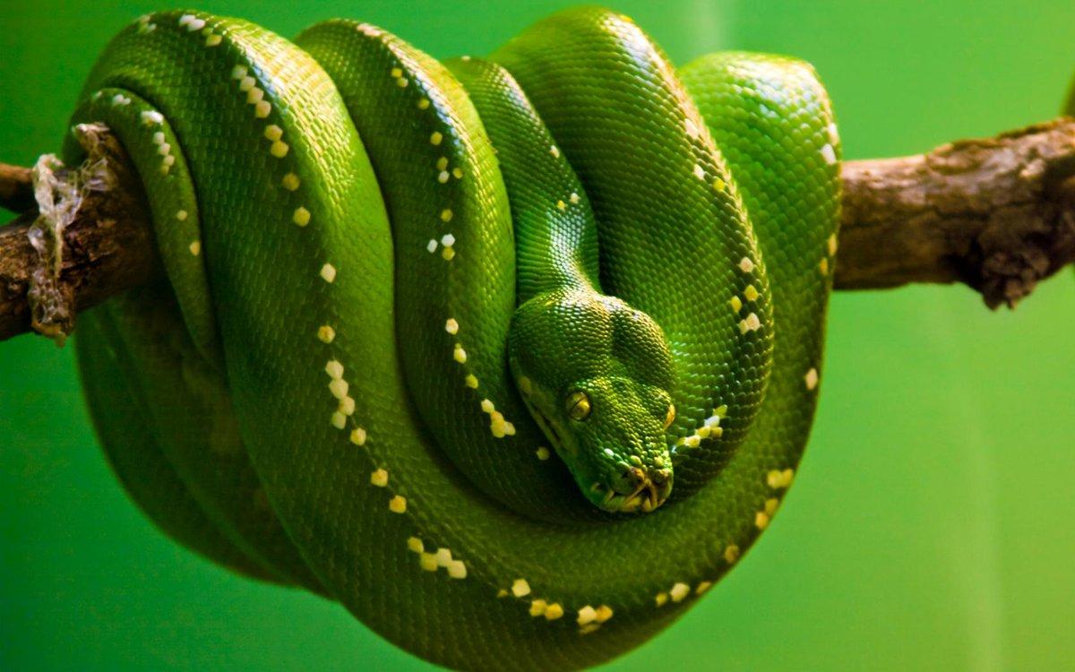 Snake pornpic nude cute breasts