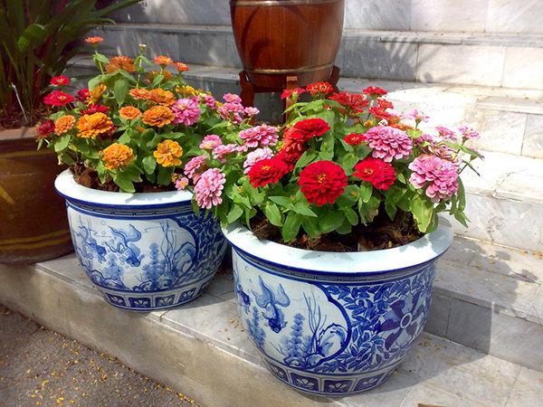 77Какие цветы посадить в вазоне чтобы цвели все лето