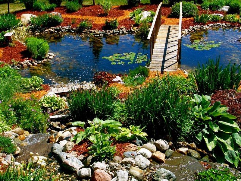 Фото дизайна около пруда