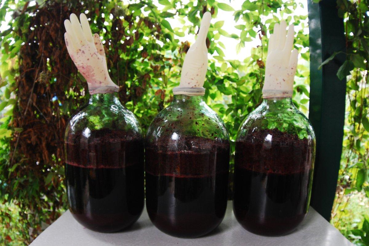 Как сделать вино с простого винограда 448