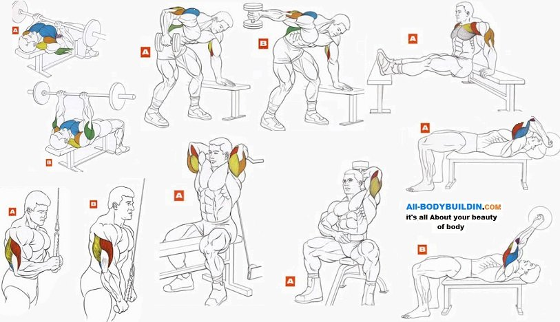 Упражнение на трицепс и бицепс в домашних условиях 218