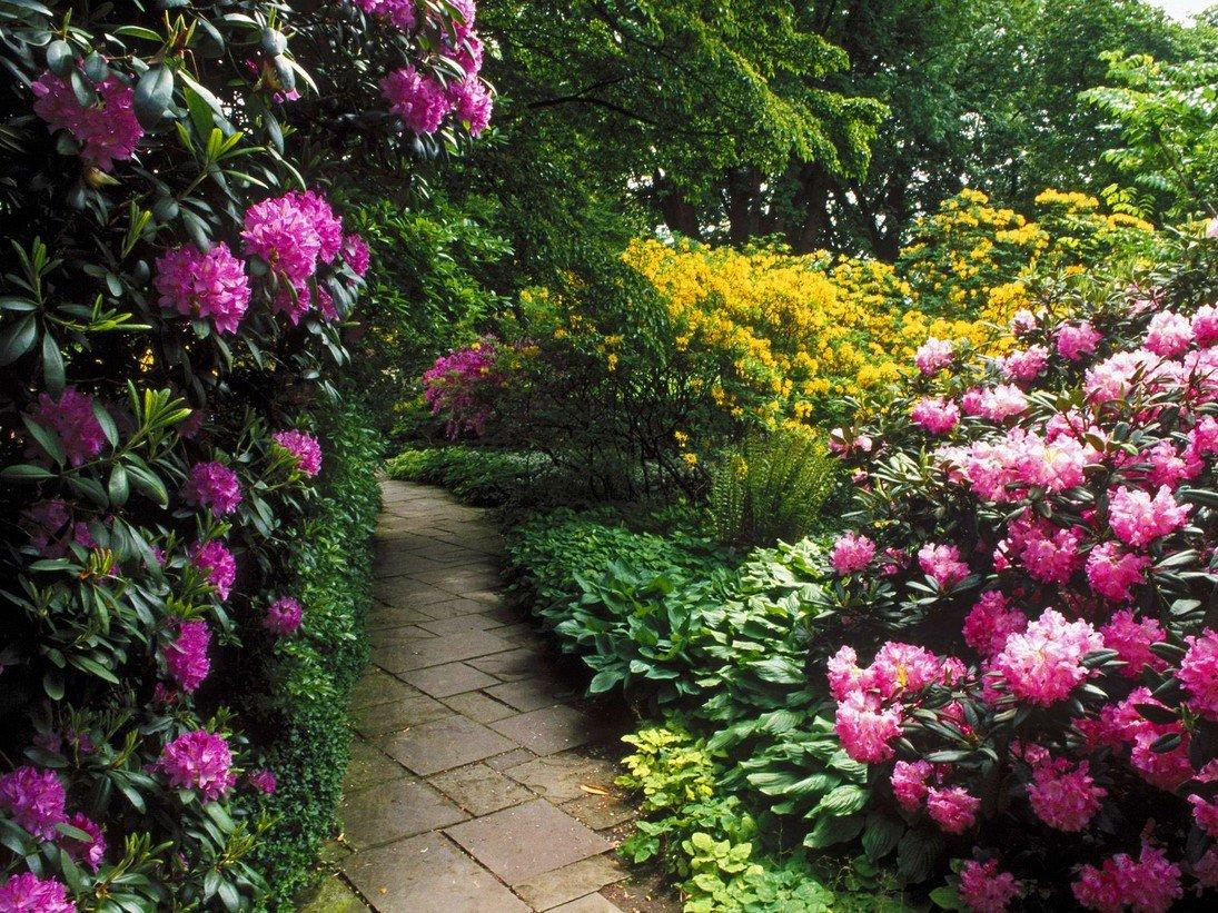 Все цветах вашем саду фото