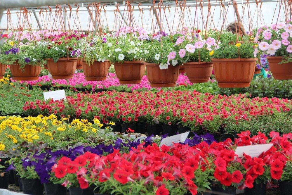 В омске рассада цветов 5
