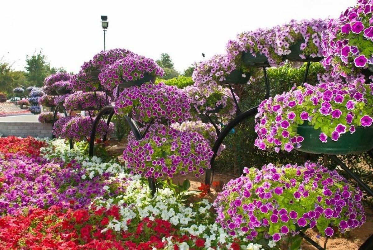 Фото цветы в садике