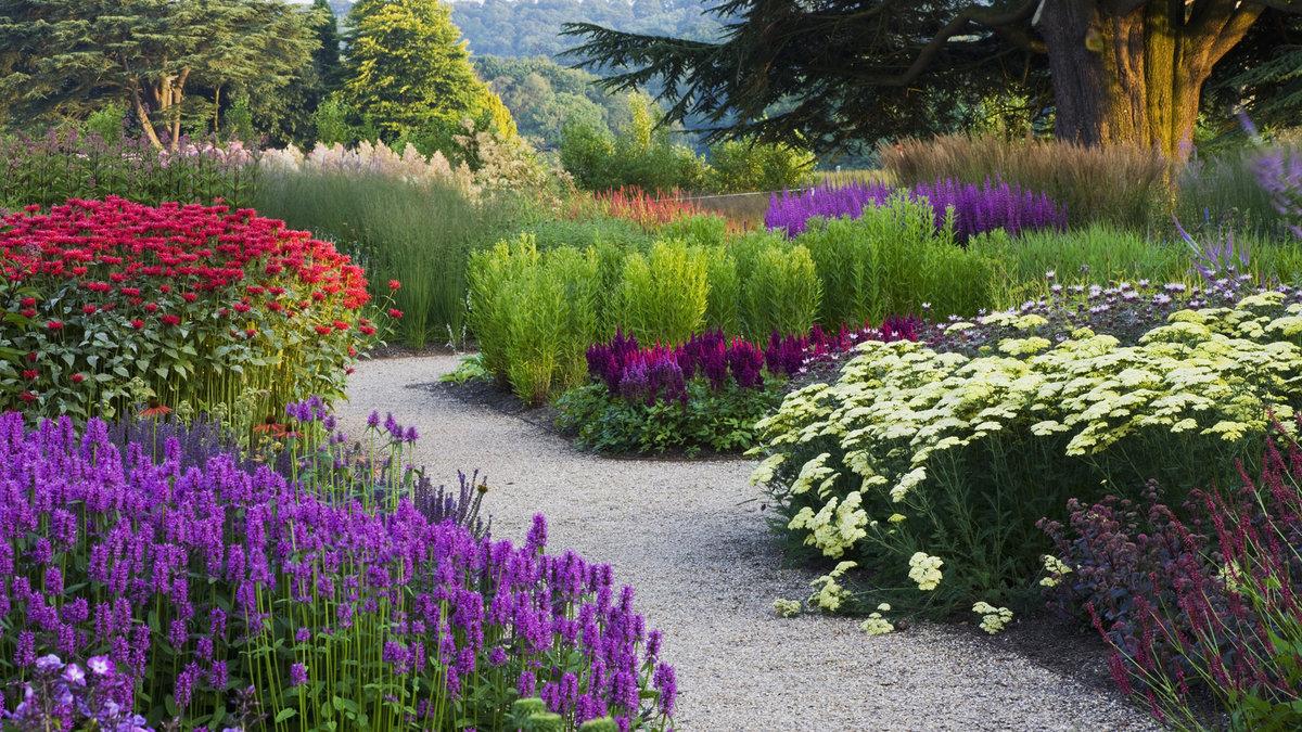 Цветы цветущие в саду все лето фото и