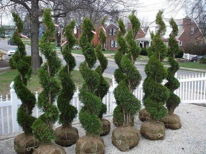 Садовые топиарии своими руками мастер класс