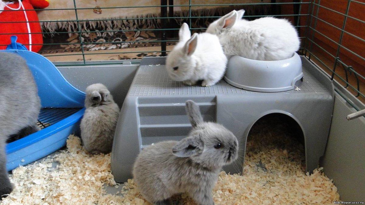 Уход за декоративными кроликами в домашних условиях