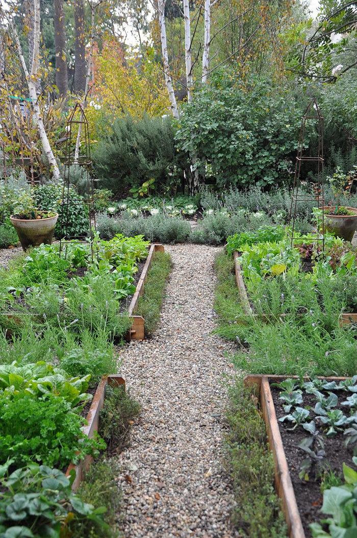 Сад огород фото 32