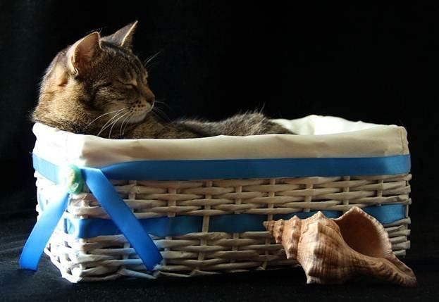Корзинка для кота своими руками
