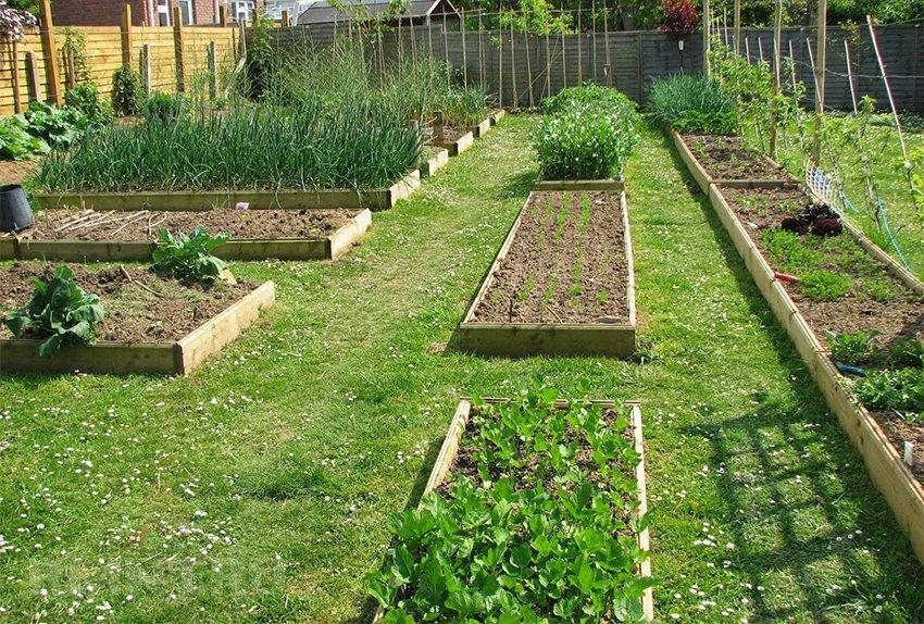 Как сделать сад из огорода 831