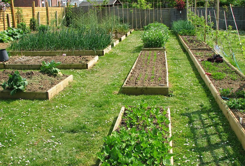 Сад.огород на даче своими руками фото