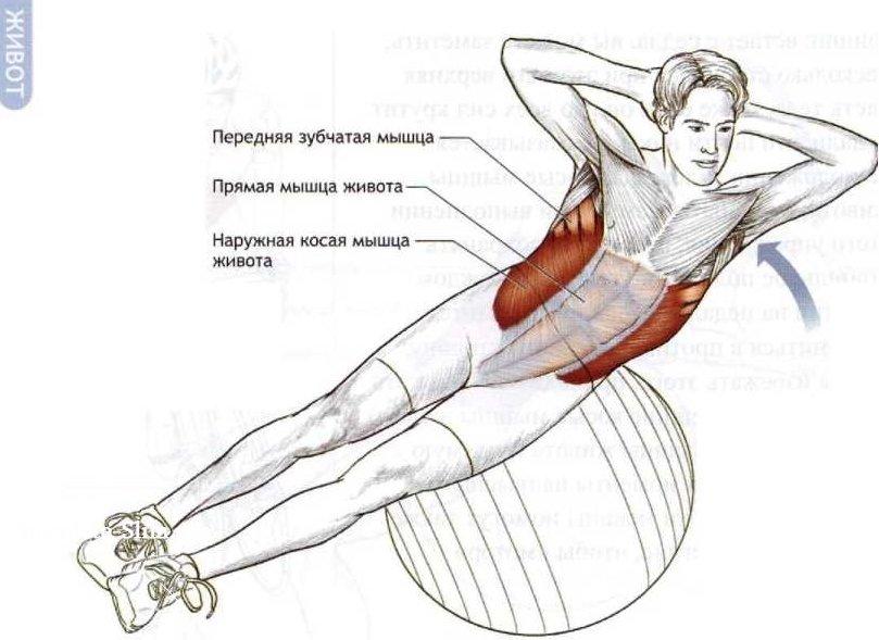 Как накачать все мышцы живота в домашних условиях 647