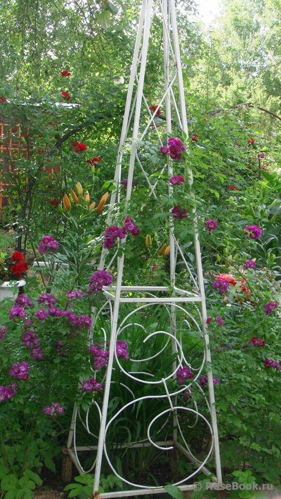 Стойка для вьющихся растений фото