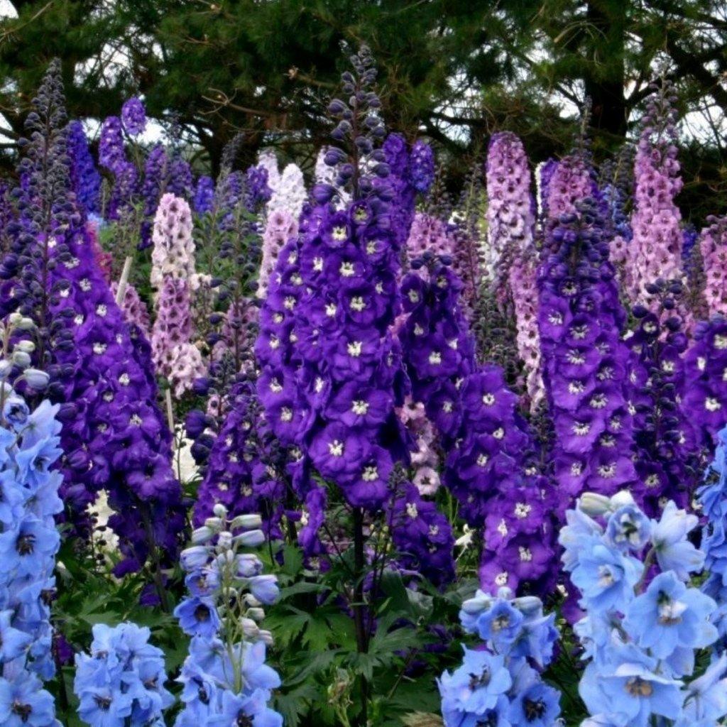 Цветок 34
