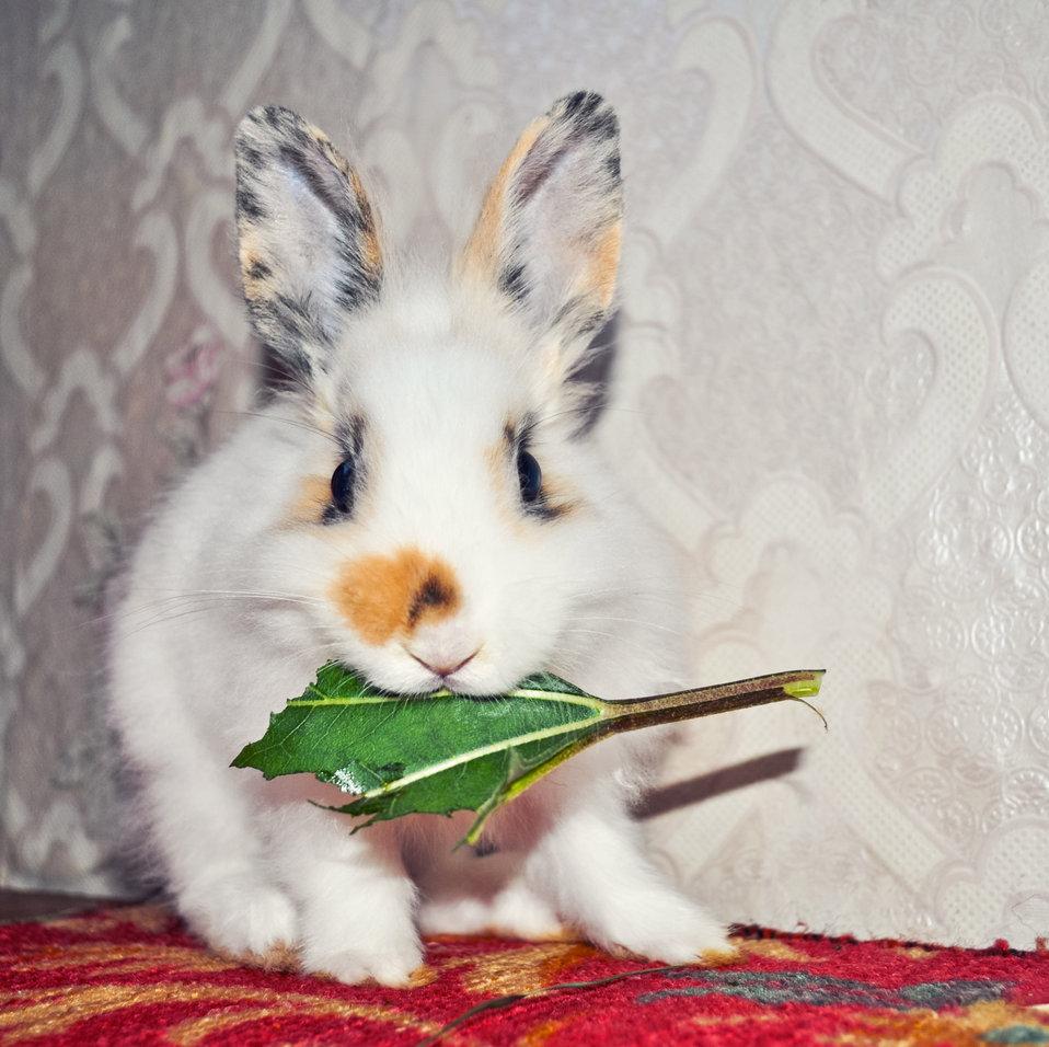 Искусственное кормление новорождённых крольчат. Кролики 16