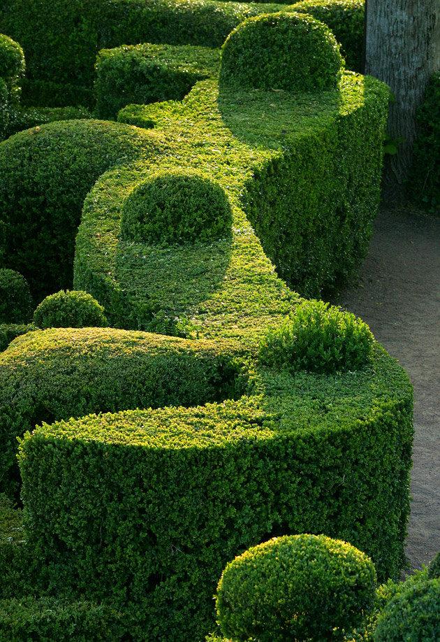 Живые изгороди ландшафтный дизайн