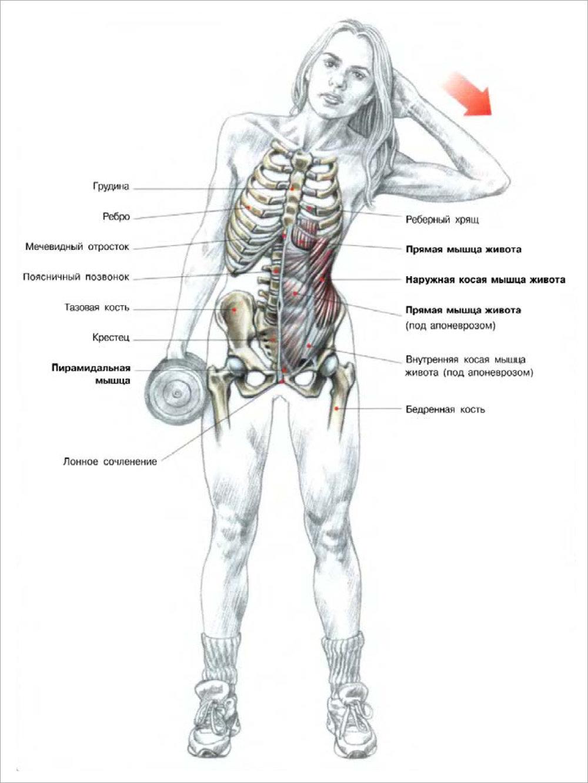 Как накачать все мышцы живота в домашних условиях 137